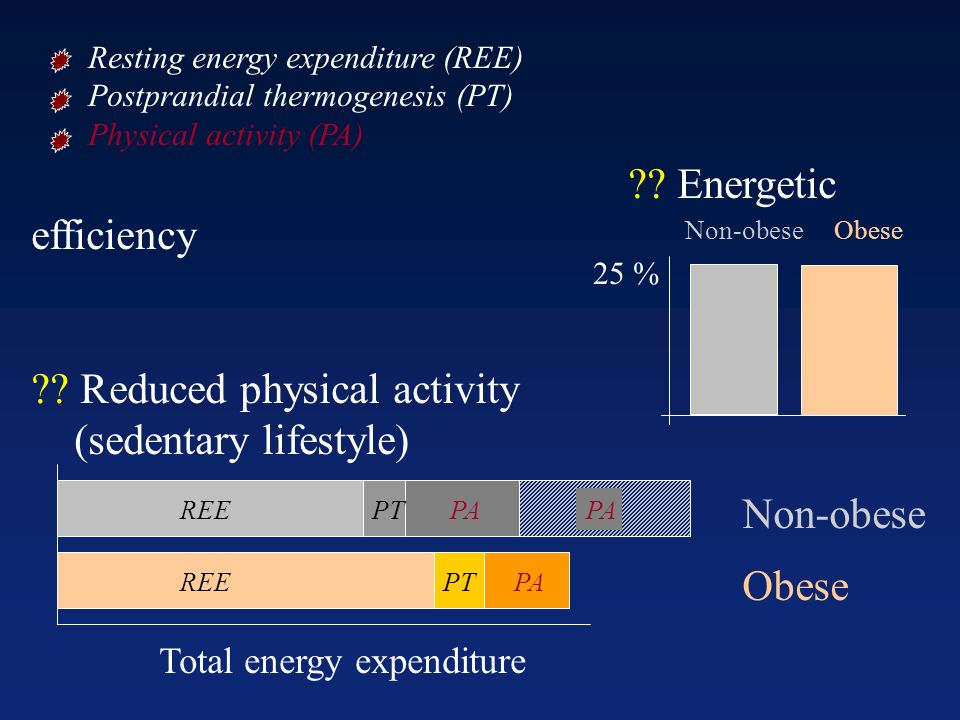Resting energy expenditure (REE) Postprandial thermogenesis (PT) Physical activity (PA) ?? Energetic efficiency ?? Reduced physical activity (sedentar