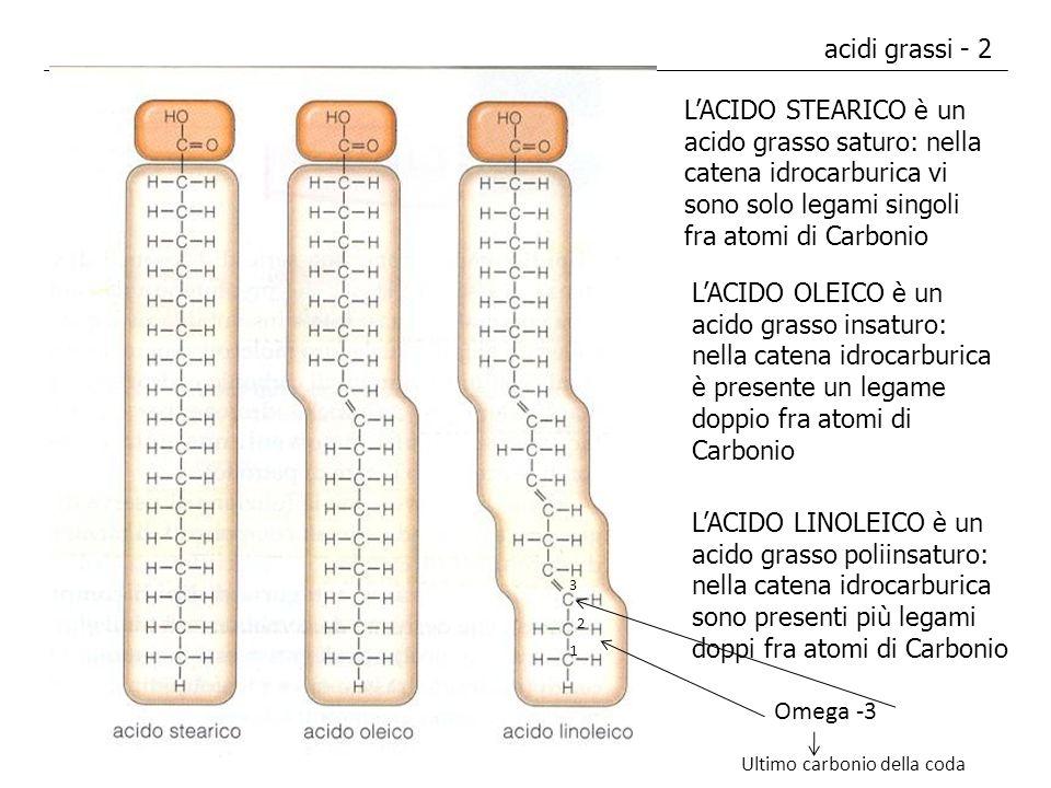 acidi grassi - 2 LACIDO STEARICO è un acido grasso saturo: nella catena idrocarburica vi sono solo legami singoli fra atomi di Carbonio LACIDO OLEICO