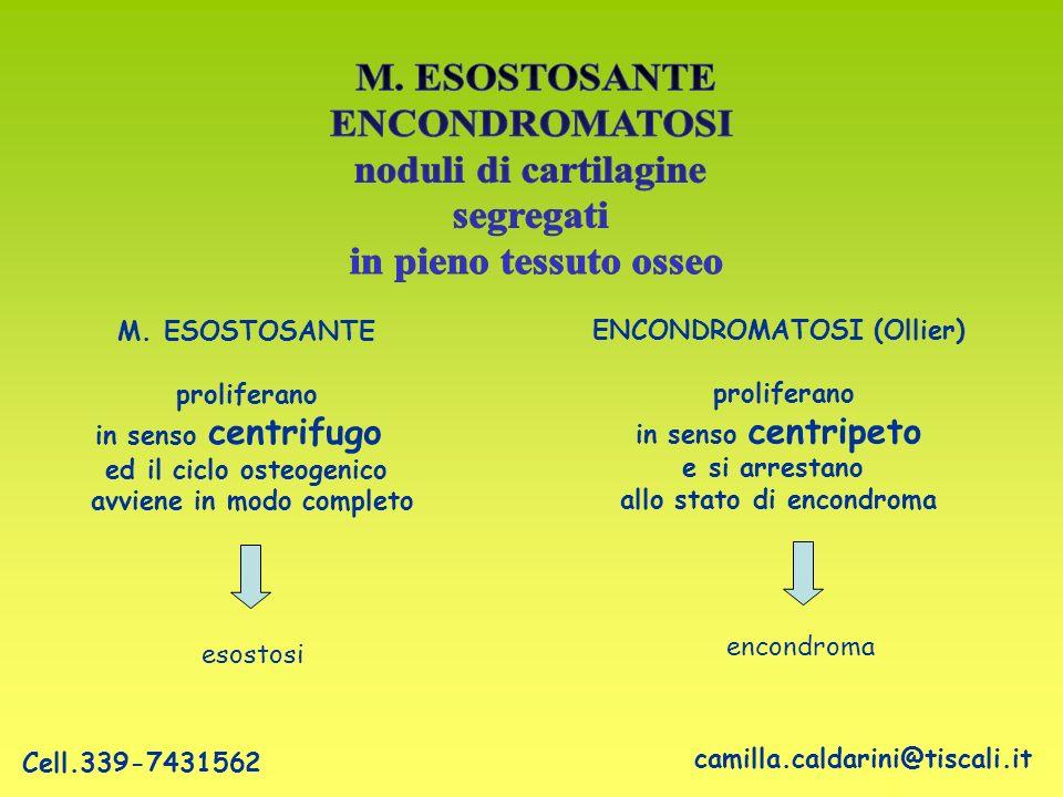 ENCONDROMATOSI (Ollier) proliferano in senso centripeto e si arrestano allo stato di encondroma M. ESOSTOSANTE proliferano in senso centrifugo ed il c