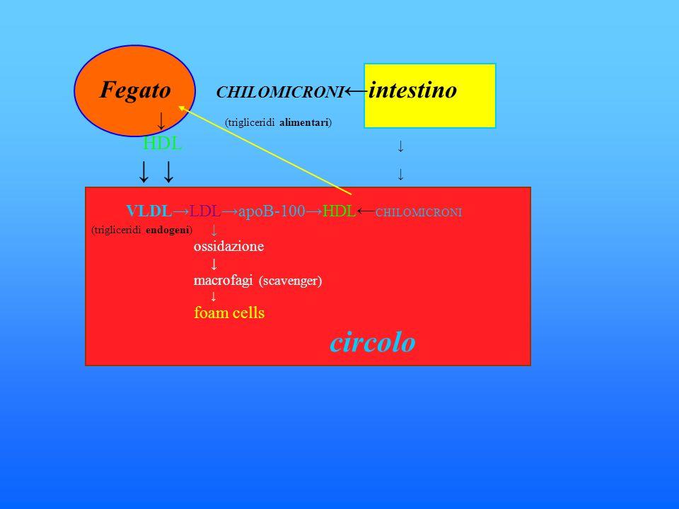 VLDLLDLapoB-100HDL CHILOMICRONI (trigliceridi endogeni) ossidazione macrofagi (scavenger) foam cells circolo (trigliceridi alimentari) HDL Fegato CHILOMICRONI intestino