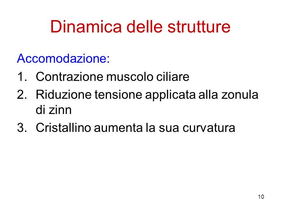 10 Dinamica delle strutture Accomodazione: 1.Contrazione muscolo ciliare 2.Riduzione tensione applicata alla zonula di zinn 3.Cristallino aumenta la s