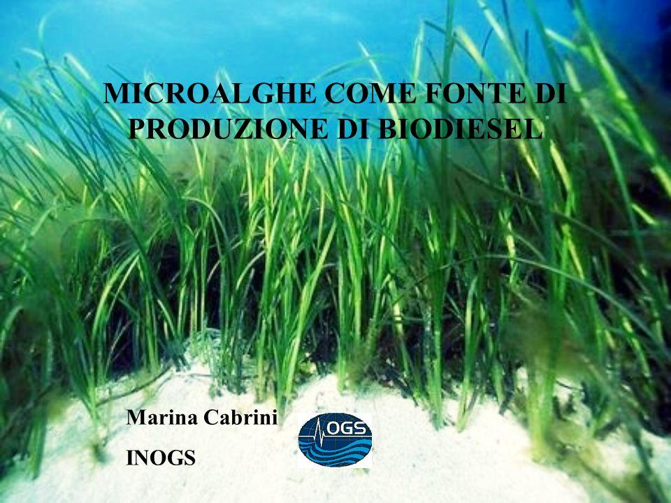 MICROALGHE COME FONTE DI PRODUZIONE DI BIODIESEL Marina Cabrini INOGS