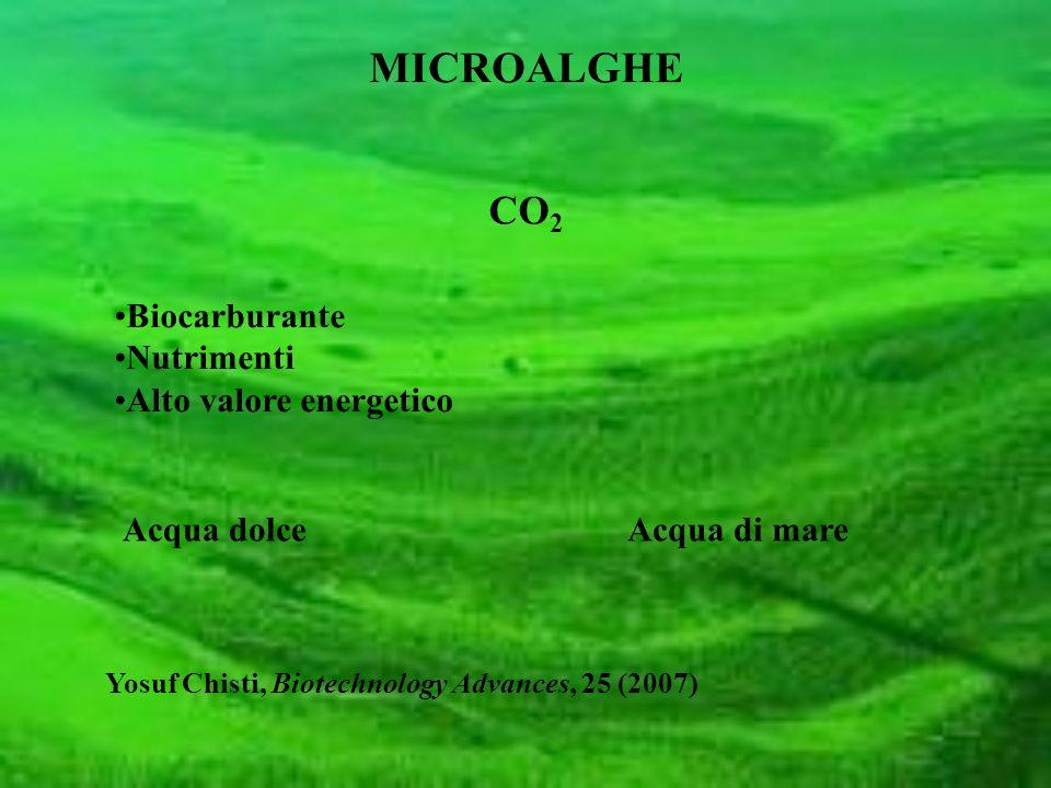 MICROALGHE CO 2 Biocarburante Nutrimenti Alto valore energetico Yosuf Chisti, Biotechnology Advances, 25 (2007) Acqua dolceAcqua di mare