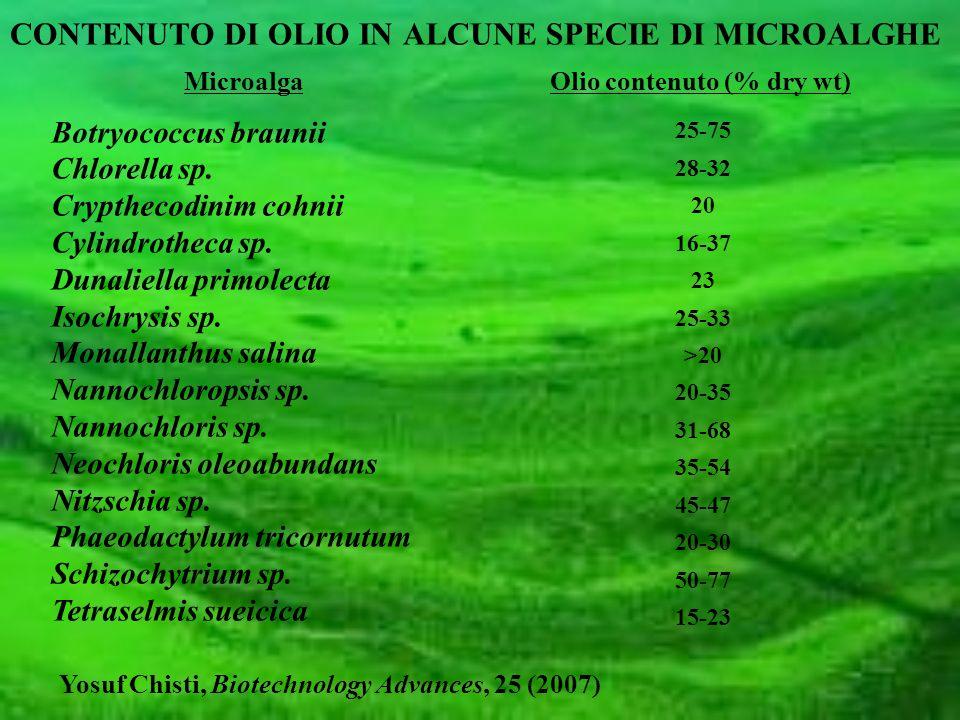 25-75 28-32 20 16-37 23 25-33 >20 20-35 31-68 35-54 45-47 20-30 50-77 15-23 CONTENUTO DI OLIO IN ALCUNE SPECIE DI MICROALGHE MicroalgaOlio contenuto (