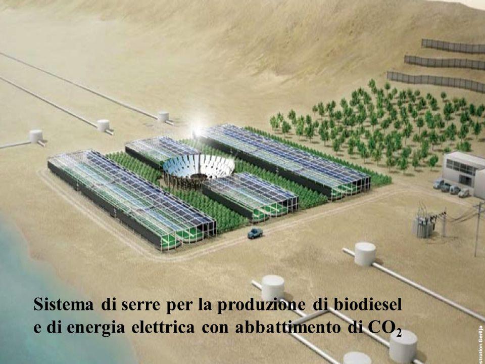Sistema di serre per la produzione di biodiesel e di energia elettrica con abbattimento di CO 2