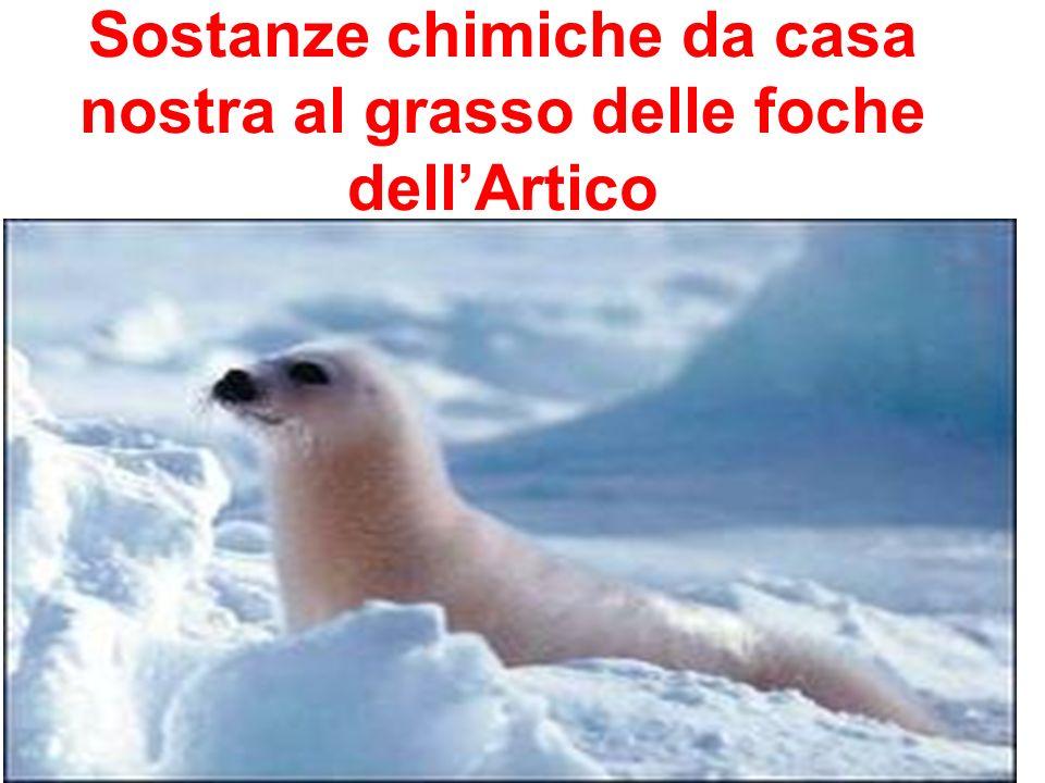 Sostanze chimiche da casa nostra al grasso delle foche dellArtico.