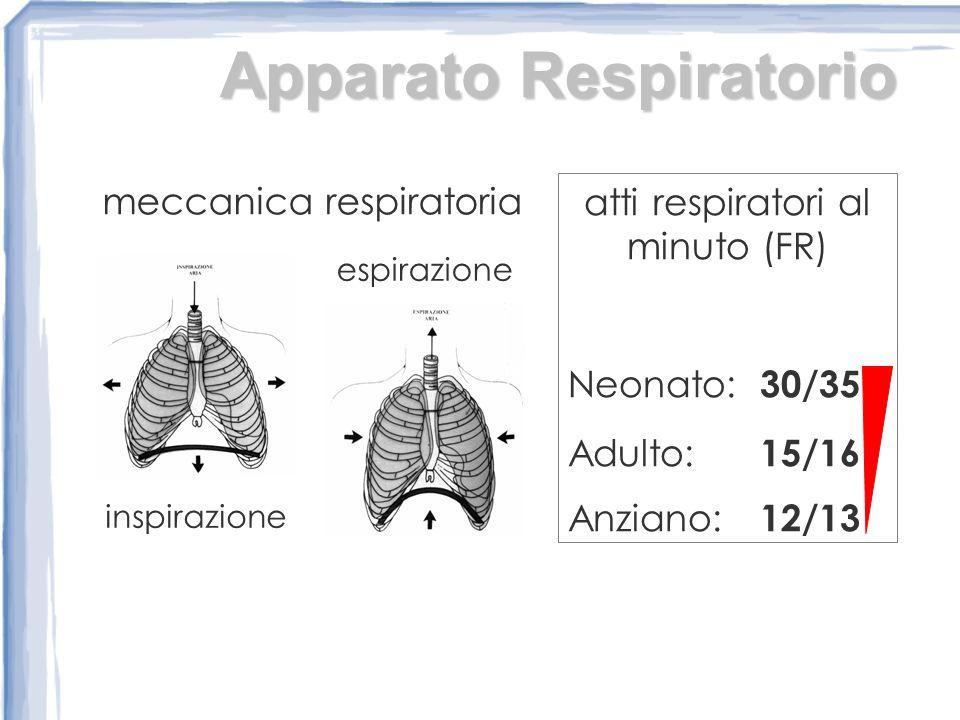 Apparato Respiratorio meccanica respiratoria inspirazione espirazione atti respiratori al minuto (FR) Neonato: 30/35 Adulto: 15/16 Anziano: 12/13
