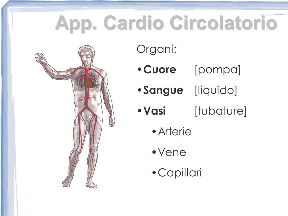 App. Cardio Circolatorio Organi: Cuore [pompa] Sangue [liquido] Vasi [tubature] Arterie Vene Capillari