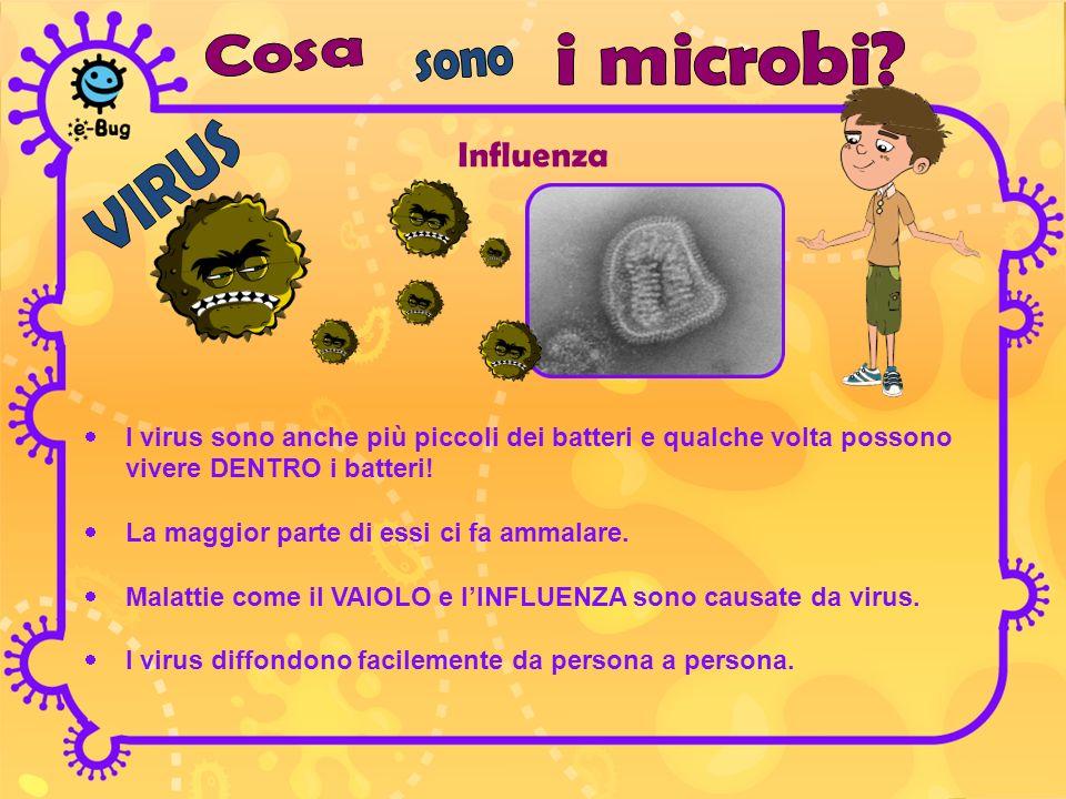 Influenza I virus sono anche più piccoli dei batteri e qualche volta possono vivere DENTRO i batteri! La maggior parte di essi ci fa ammalare. Malatti