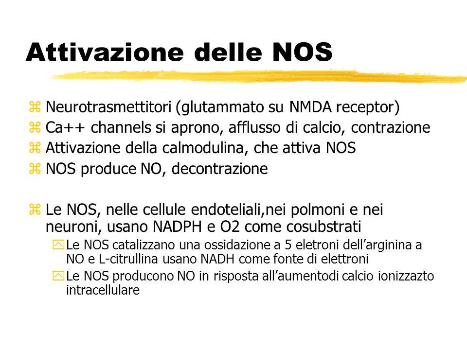 Attivazione delle NOS zNeurotrasmettitori (glutammato su NMDA receptor) zCa++ channels si aprono, afflusso di calcio, contrazione zAttivazione della c