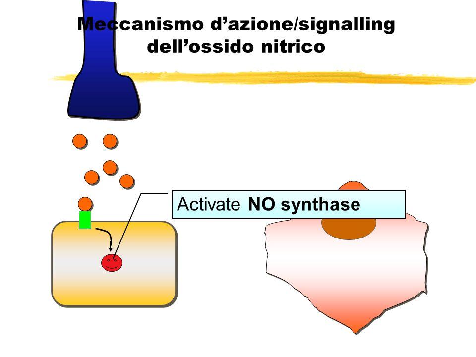 Arg NO Meccanismo dazione/signalling dellossido nitrico