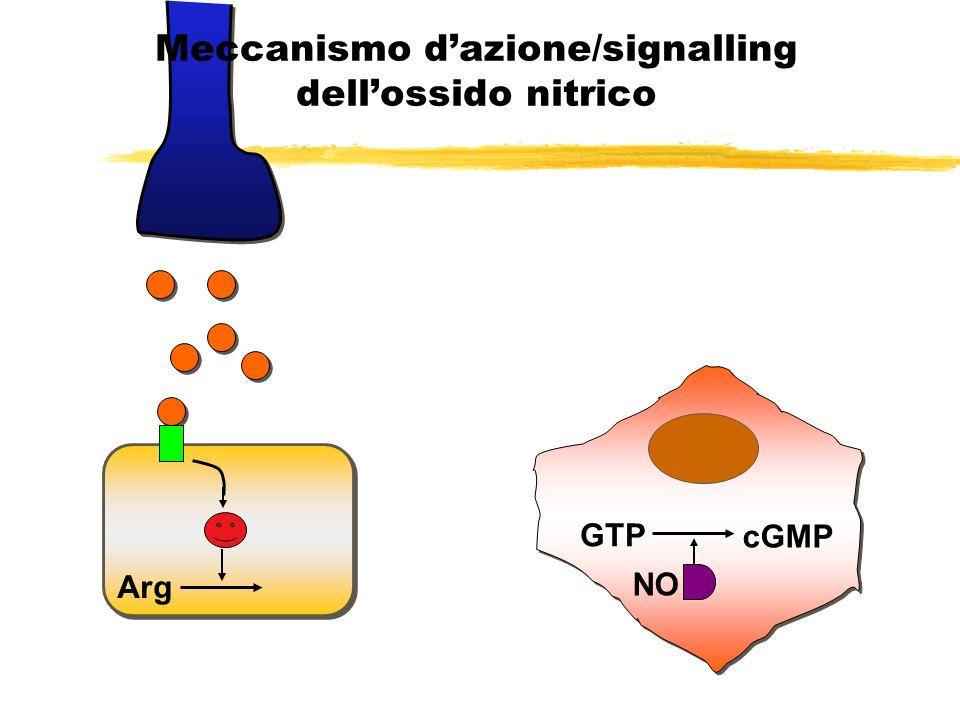 Arg NO GTP cGMP Meccanismo dazione/signalling dellossido nitrico