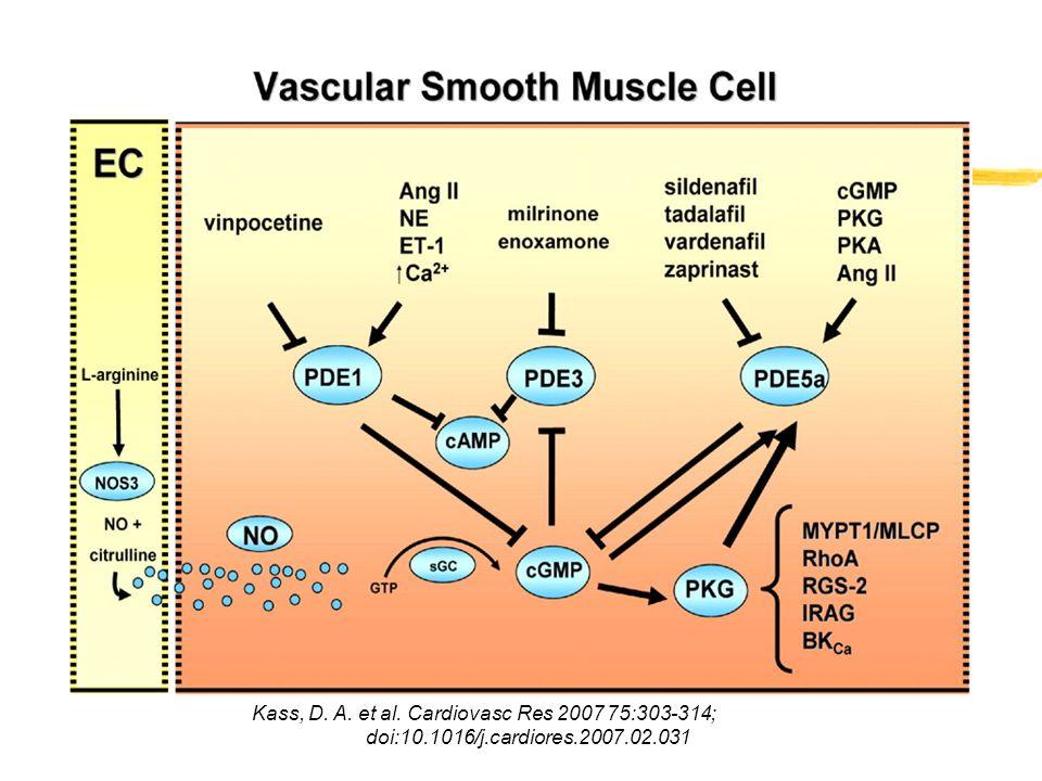 Qual è il ruolo dellossido nitrico nel corpo umano.