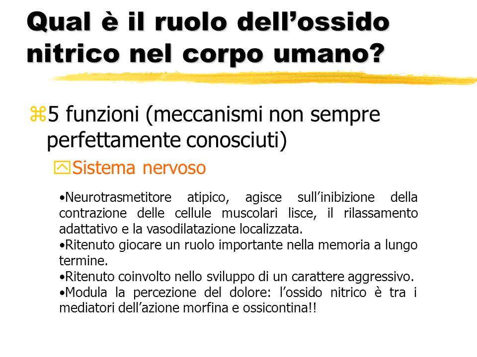 Qual è il ruolo dellossido nitrico nel corpo umano? z5 funzioni (meccanismi non sempre perfettamente conosciuti) ySistema nervoso Neurotrasmetitore at