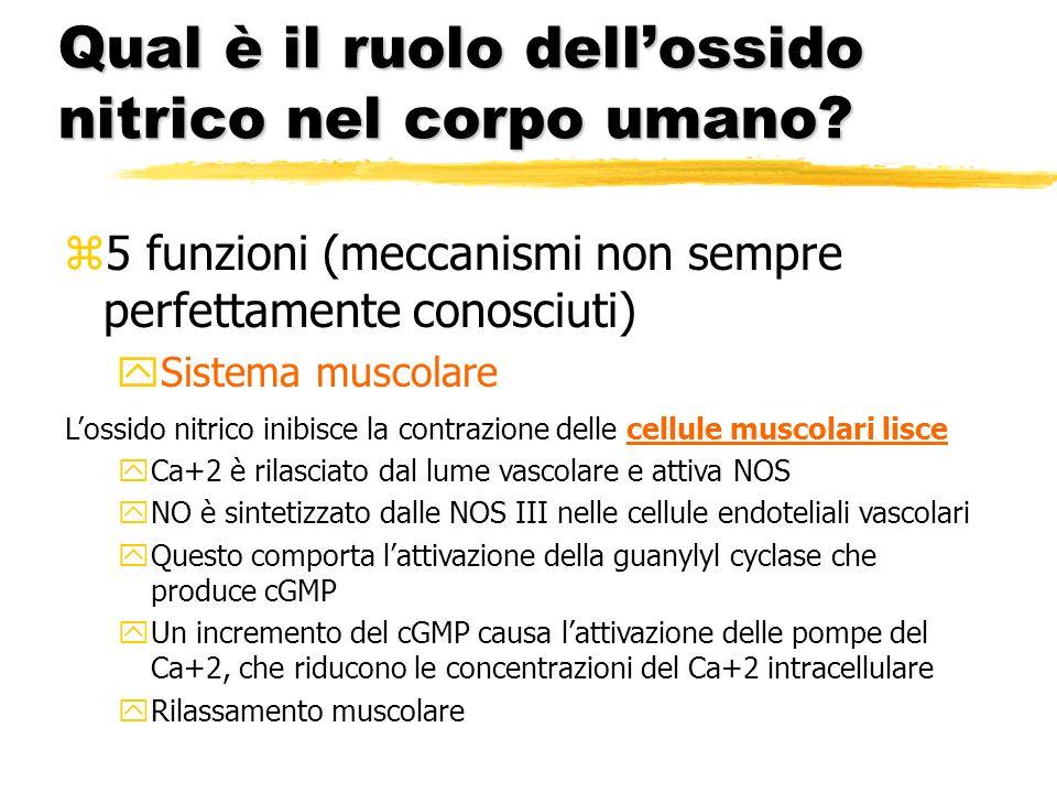Qual è il ruolo dellossido nitrico nel corpo umano? z5 funzioni (meccanismi non sempre perfettamente conosciuti) ySistema muscolare Lossido nitrico in
