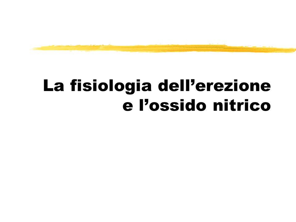 1.Stimolo dellerezione 2. Iniziazione neuronale 3.