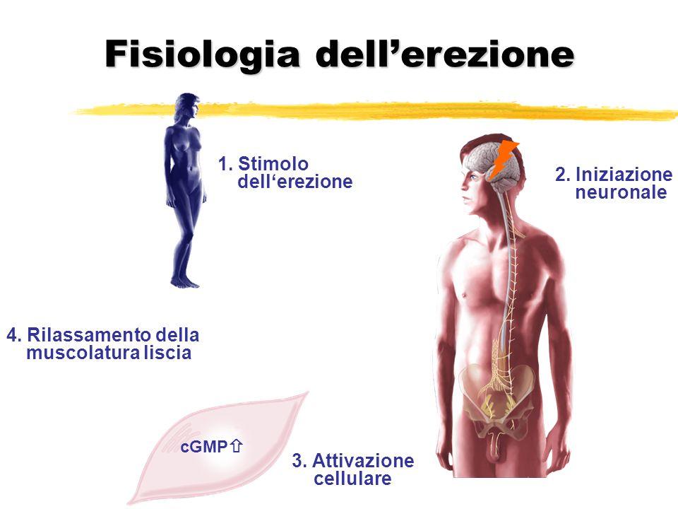 1. Stimolo dellerezione 2. Iniziazione neuronale 3. Attivazione cellulare 4. Rilassamento della muscolatura liscia cGMP Fisiologia dellerezione