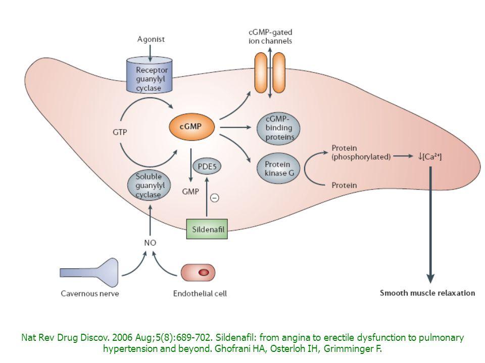 zRilassamento sfinteri arteriolari penieni zAumento del flusso arterioso zRiempimento dei corpi cavernosi Fisiologia dellerezione