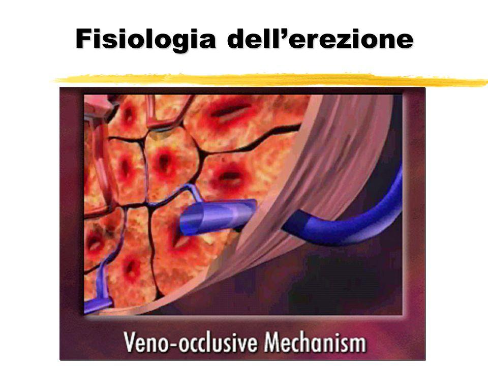 Fisiologia dellerezione