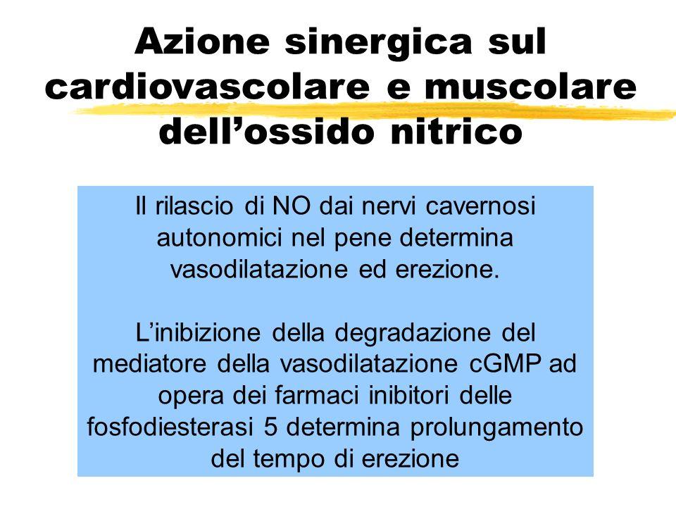 Il rilascio di NO dai nervi cavernosi autonomici nel pene determina vasodilatazione ed erezione.