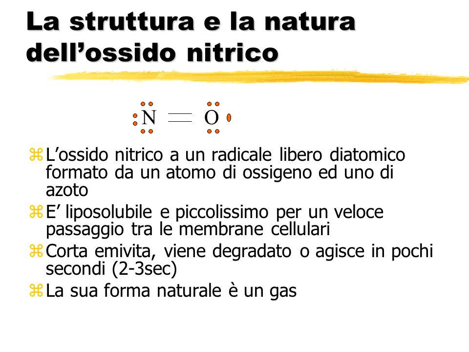 dellossido nitrico La sintesi dellossido nitrico zPrecursore: L-arginina zReazione catalizzata dal nitric oxide synthase (NOS) COO- C (CH2)3 NH C H2N H NH2+ +H3N Arginina NOS NADPH + O2 NAD+ COO- C (CH2)3 NH C H+H3N N + H2N H OH N-w-Idrossiarginina COO- C (CH2)3 NH H+H3N + NO NOS C ONH2 Citrullina