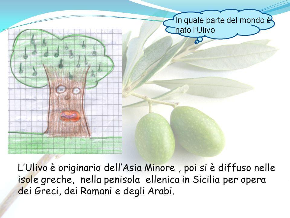 In quale parte del mondo è nato lUlivo LUlivo è originario dellAsia Minore, poi si è diffuso nelle isole greche, nella penisola ellenica in Sicilia pe