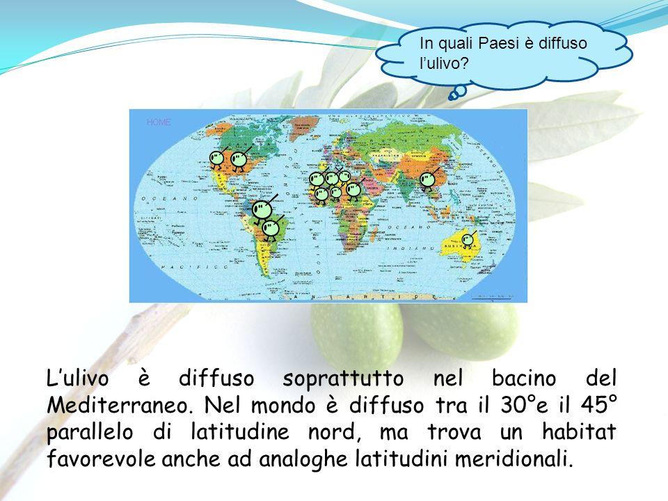 In quali Paesi è diffuso lulivo? Lulivo è diffuso soprattutto nel bacino del Mediterraneo. Nel mondo è diffuso tra il 30°e il 45° parallelo di latitud