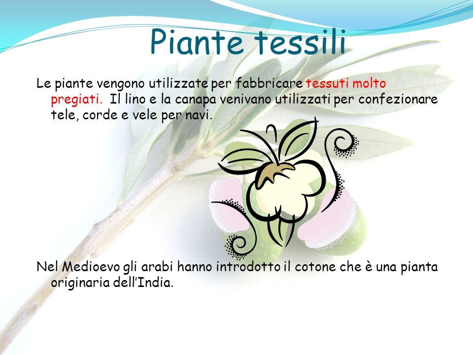 Piante tessili Le piante vengono utilizzate per fabbricare tessuti molto pregiati. Il lino e la canapa venivano utilizzati per confezionare tele, cord