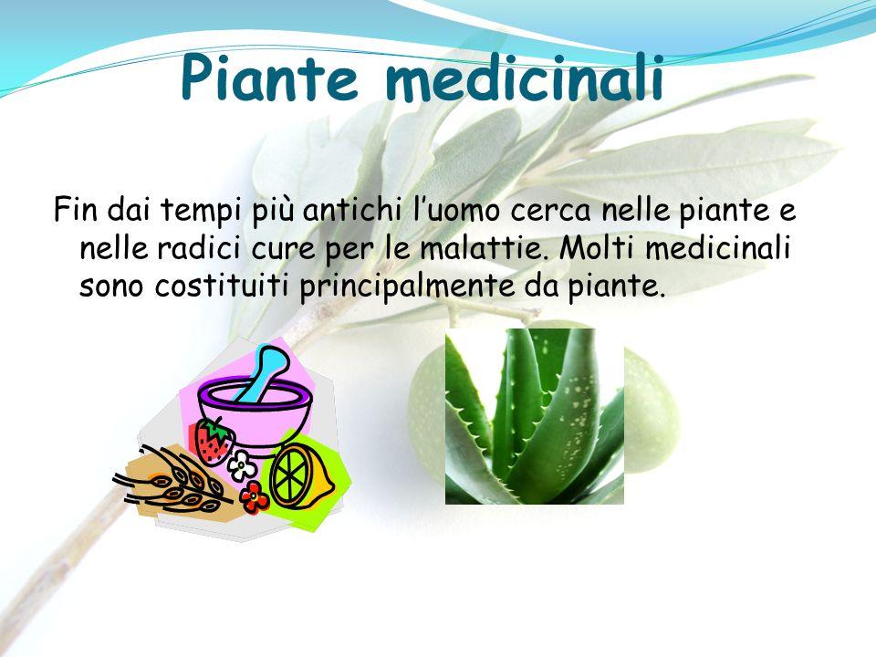 Piante medicinali Fin dai tempi più antichi luomo cerca nelle piante e nelle radici cure per le malattie. Molti medicinali sono costituiti principalme
