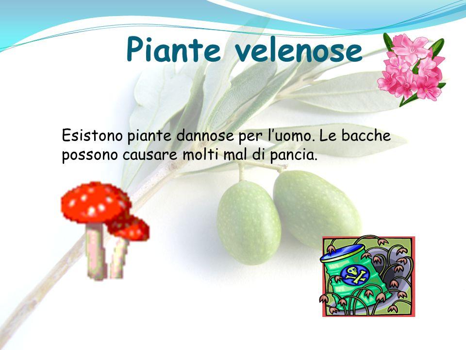 Piante velenose Esistono piante dannose per luomo. Le bacche possono causare molti mal di pancia.