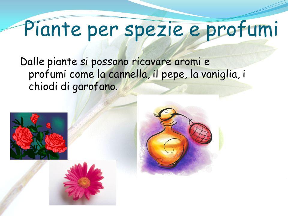 Piante per spezie e profumi Dalle piante si possono ricavare aromi e profumi come la cannella, il pepe, la vaniglia, i chiodi di garofano.