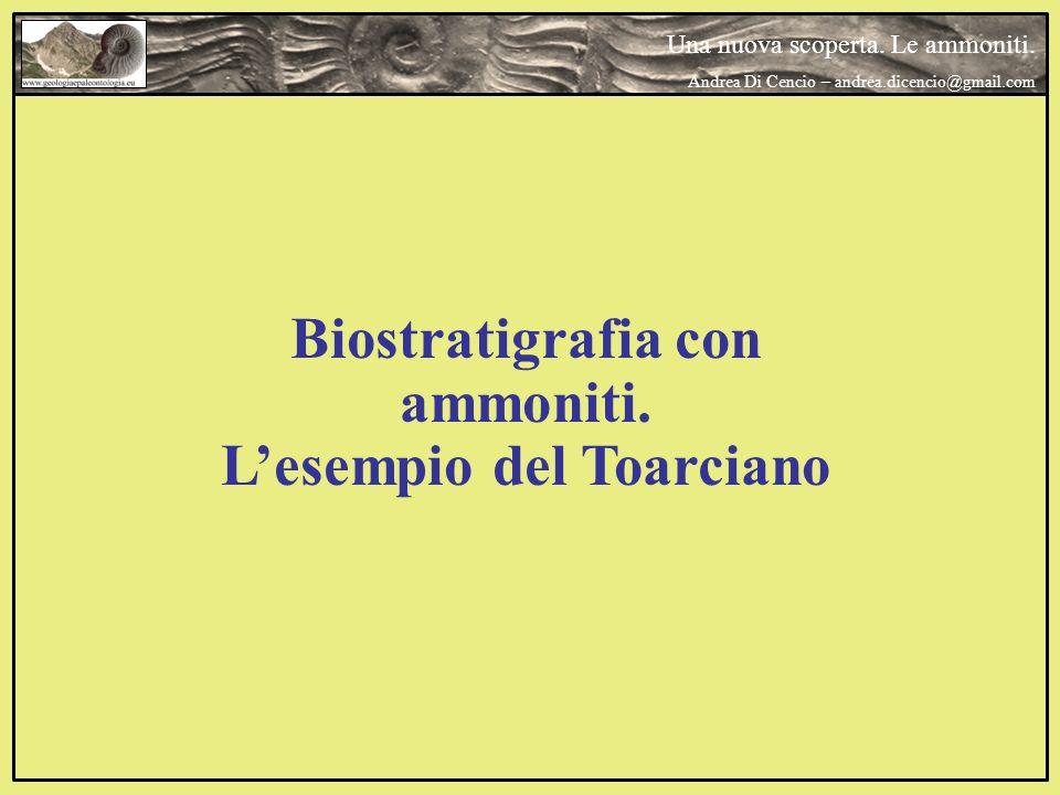 Biostratigrafia con ammoniti. Lesempio del Toarciano Una nuova scoperta. Le ammoniti. Andrea Di Cencio – andrea.dicencio@gmail.com