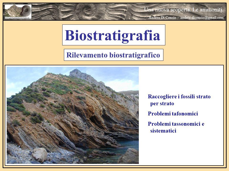 Una nuova scoperta. Le ammoniti. Andrea Di Cencio – andrea.dicencio@gmail.com Raccogliere i fossili strato per strato Problemi tafonomici Problemi tas