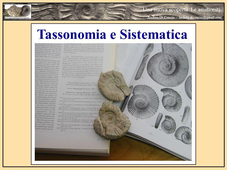 Tassonomia e Sistematica Una nuova scoperta. Le ammoniti. Andrea Di Cencio – andrea.dicencio@gmail.com
