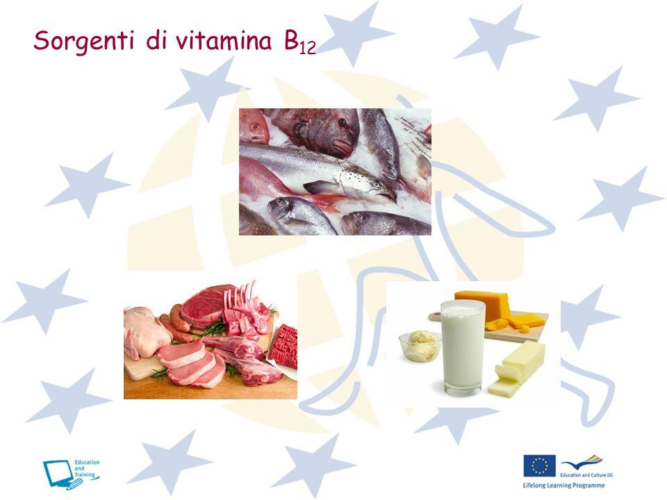 Sorgenti di vitamina B 12