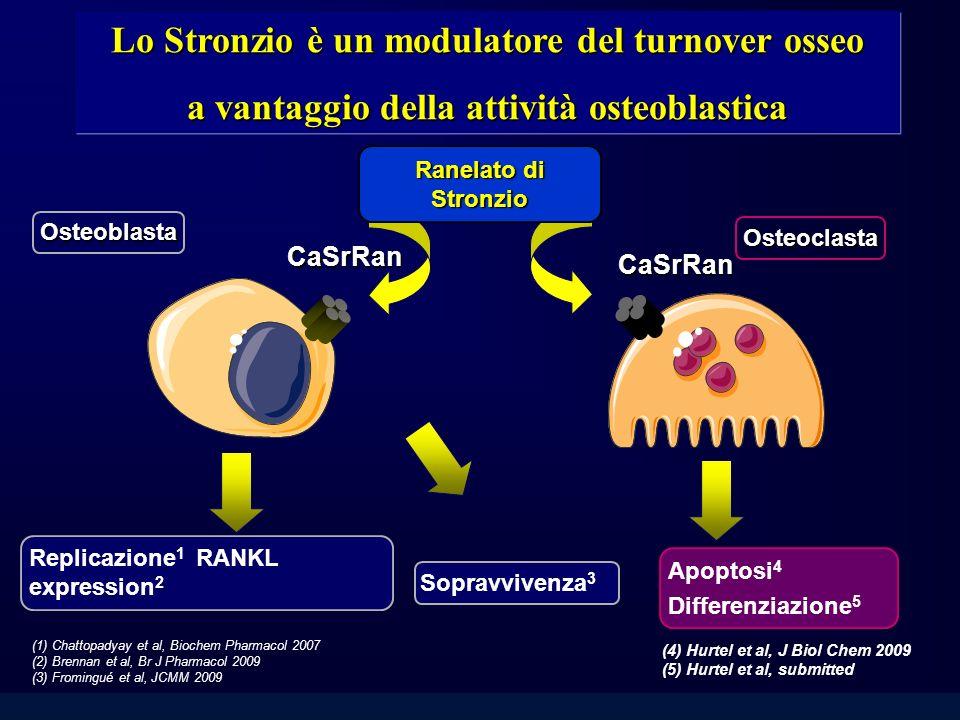 Ranelato di Stronzio Osteoblasta Osteoclasta CaSrRan CaSrRan Espressione di OPG & RANKL 2 (4) Hurtel et al, J Biol Chem 2009 (5) Hurtel et al, submitt