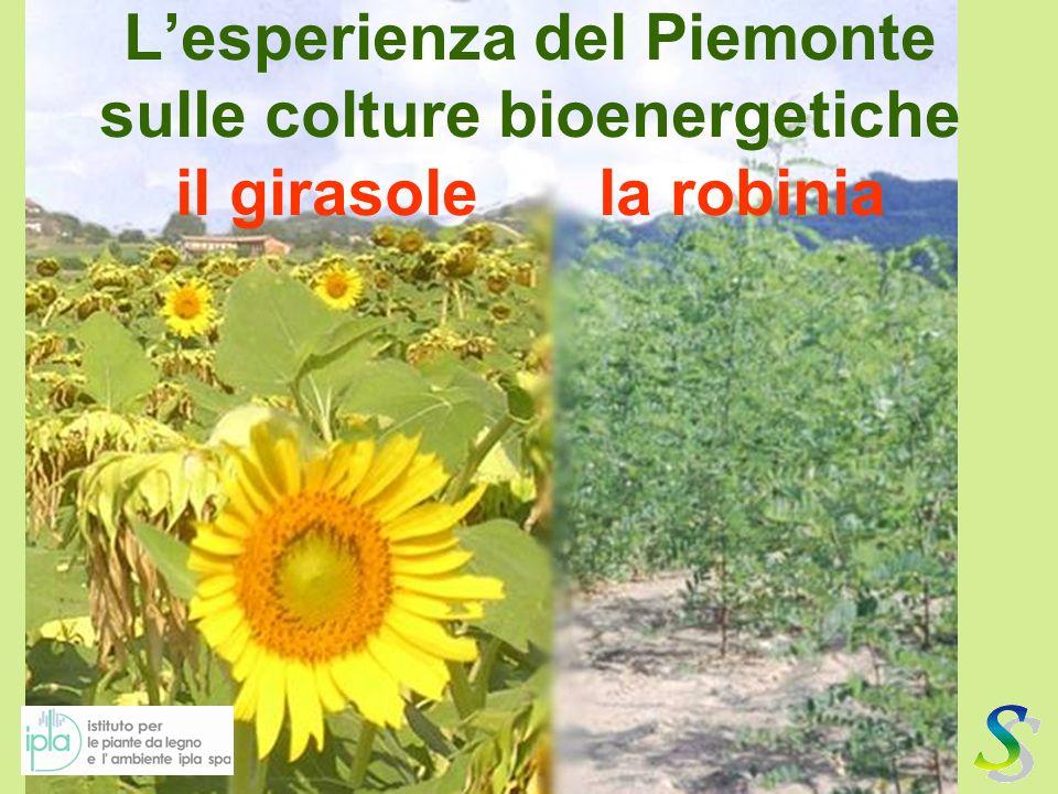 Lesperienza del Piemonte sulle colture bioenergetiche il girasolela robinia