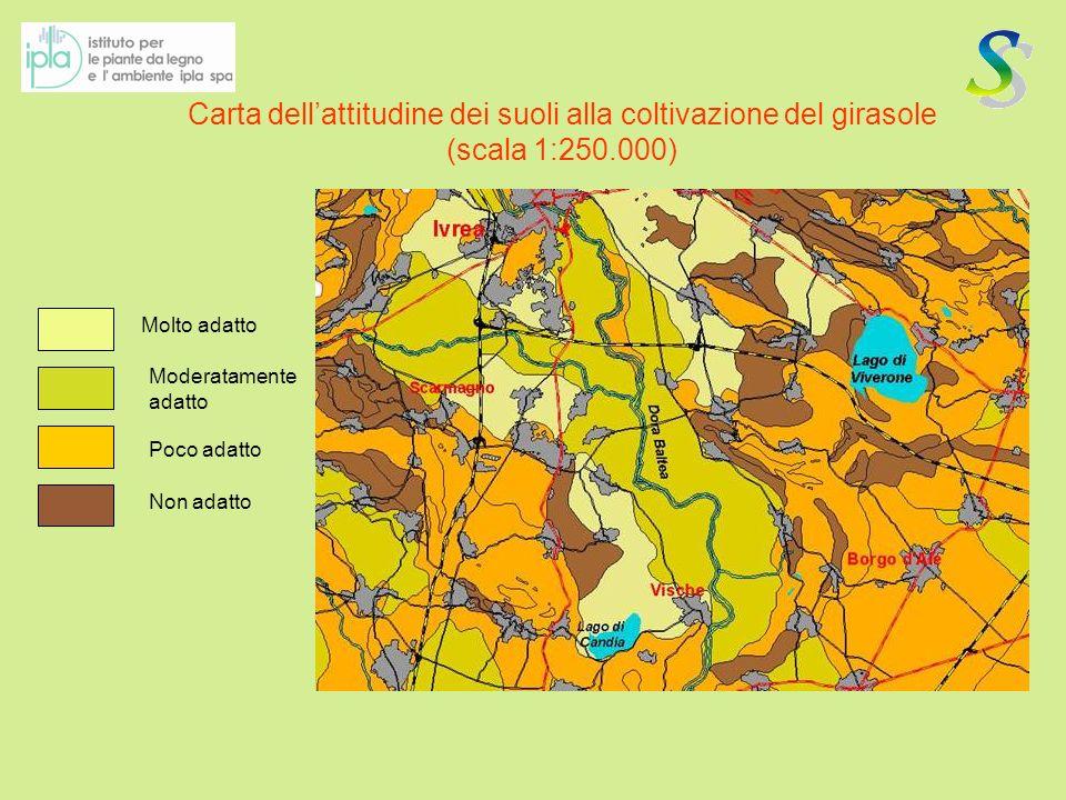 Carta dellattitudine dei suoli alla coltivazione del girasole (scala 1:250.000) Molto adatto Moderatamente adatto Non adatto Poco adatto