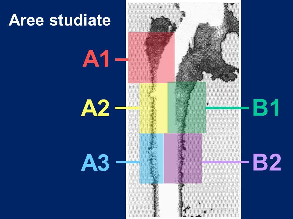 Aree studiate A1 A2 A3 B1 B2