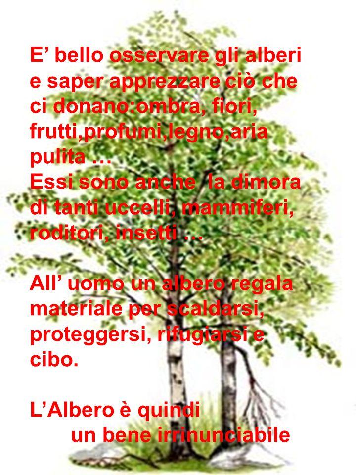 E bello osservare gli alberi e saper apprezzare ciò che ci donano:ombra, fiori, frutti,profumi,legno,aria pulita … Essi sono anche la dimora di tanti