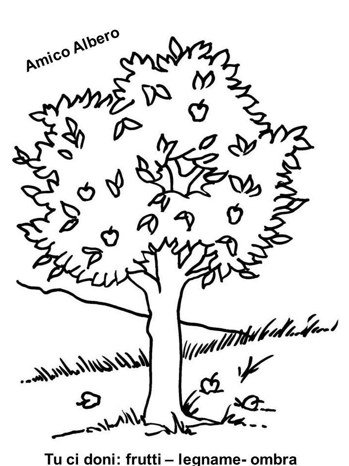 Tu ci doni: frutti – legname- ombra Amico Albero