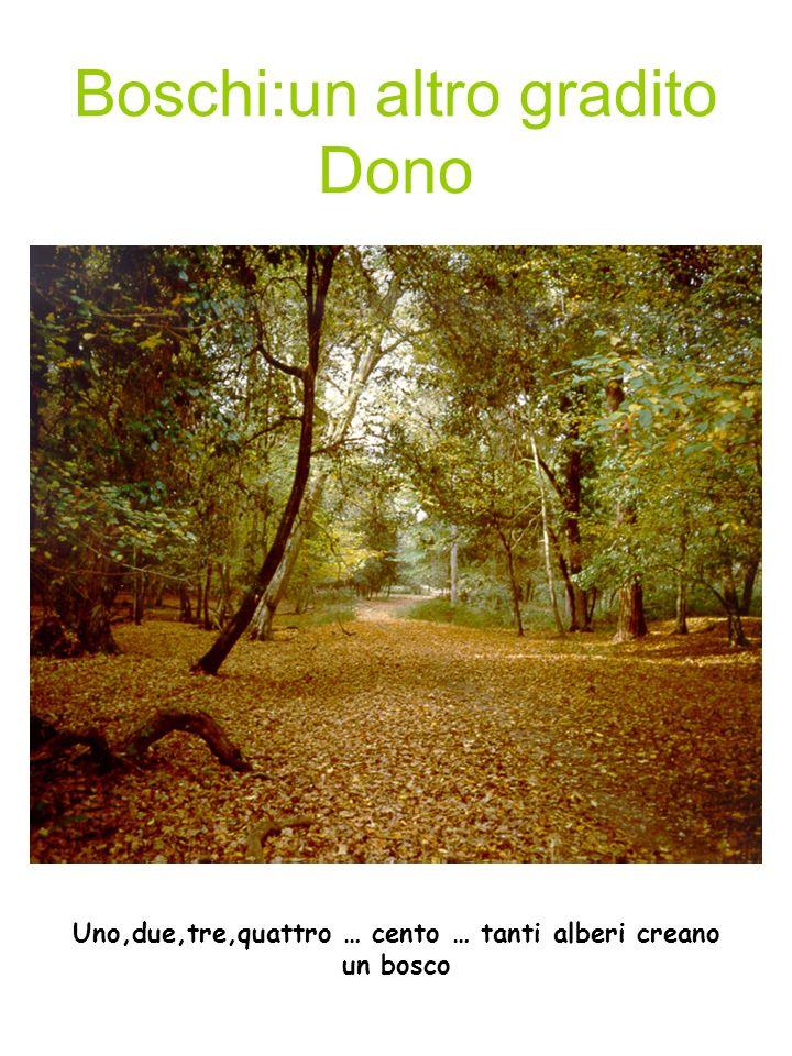 Boschi:un altro gradito Dono DISEGNO BOSCO Uno,due,tre,quattro … cento … tanti alberi creano un bosco