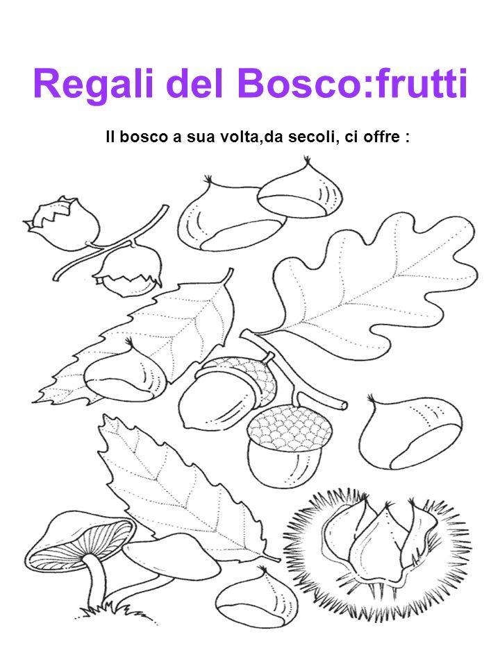 Regali del Bosco:frutti Il bosco a sua volta,da secoli, ci offre :