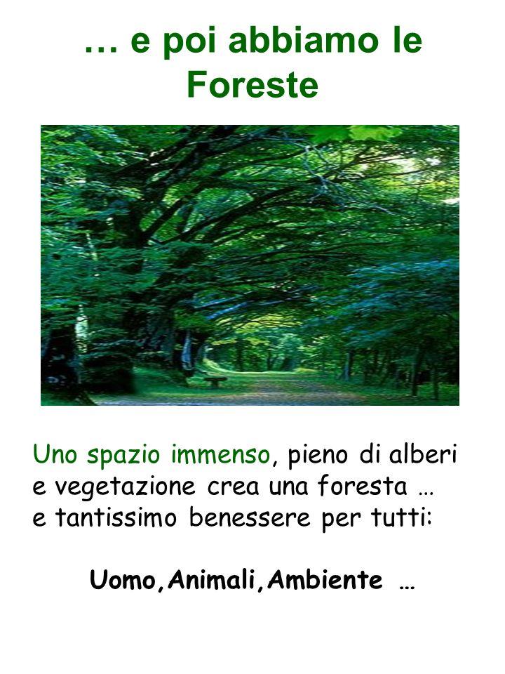 … e poi abbiamo le Foreste Uno spazio immenso, pieno di alberi e vegetazione crea una foresta … e tantissimo benessere per tutti: Uomo,Animali,Ambient