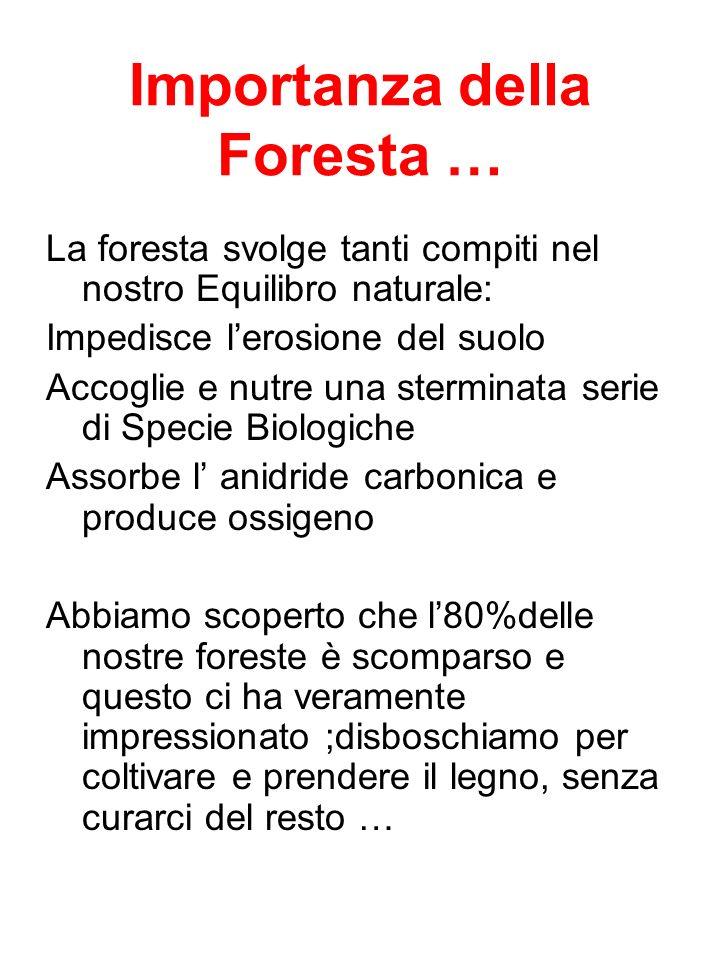 Importanza della Foresta … La foresta svolge tanti compiti nel nostro Equilibro naturale: Impedisce lerosione del suolo Accoglie e nutre una sterminat