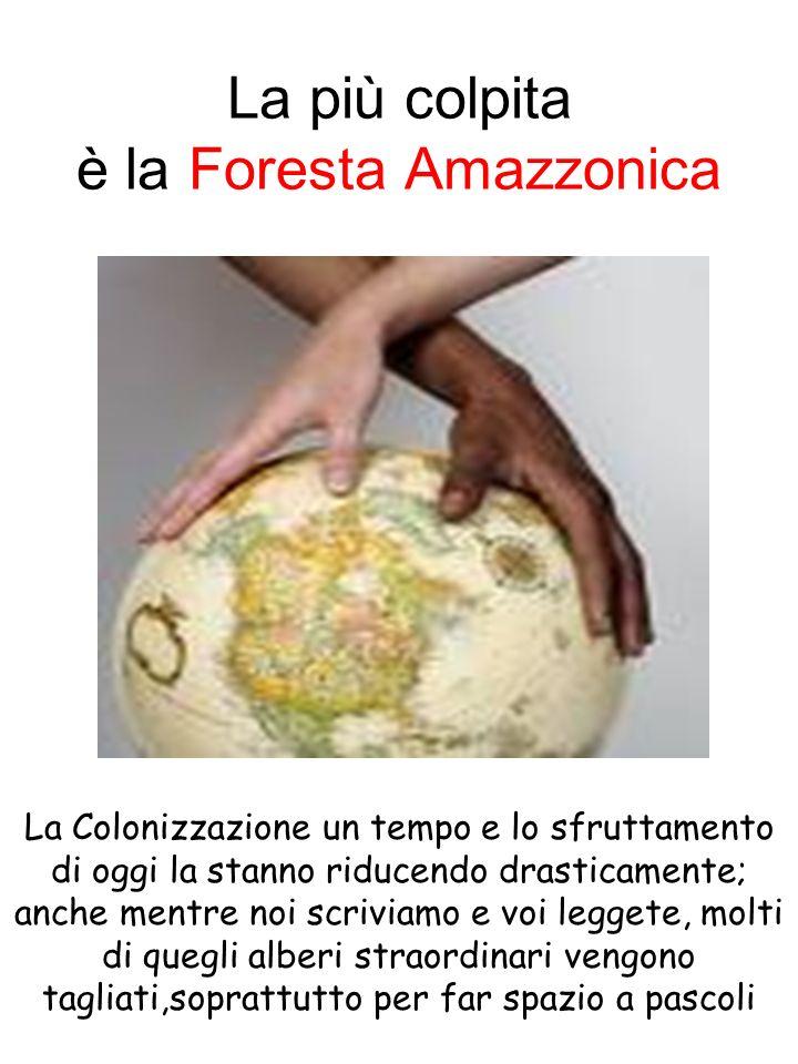 La più colpita è la Foresta Amazzonica La Colonizzazione un tempo e lo sfruttamento di oggi la stanno riducendo drasticamente; anche mentre noi scrivi
