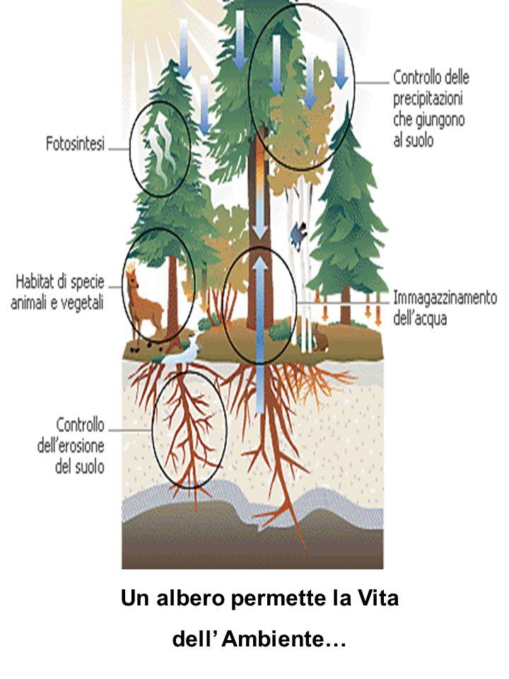 Un albero permette la Vita dell Ambiente…