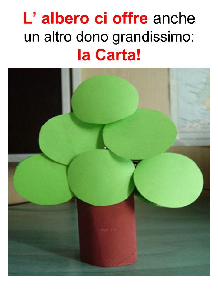 L albero ci offre anche un altro dono grandissimo: la Carta!