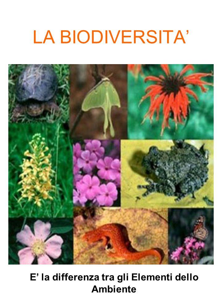 LA BIODIVERSITA E la differenza tra gli Elementi dello Ambiente