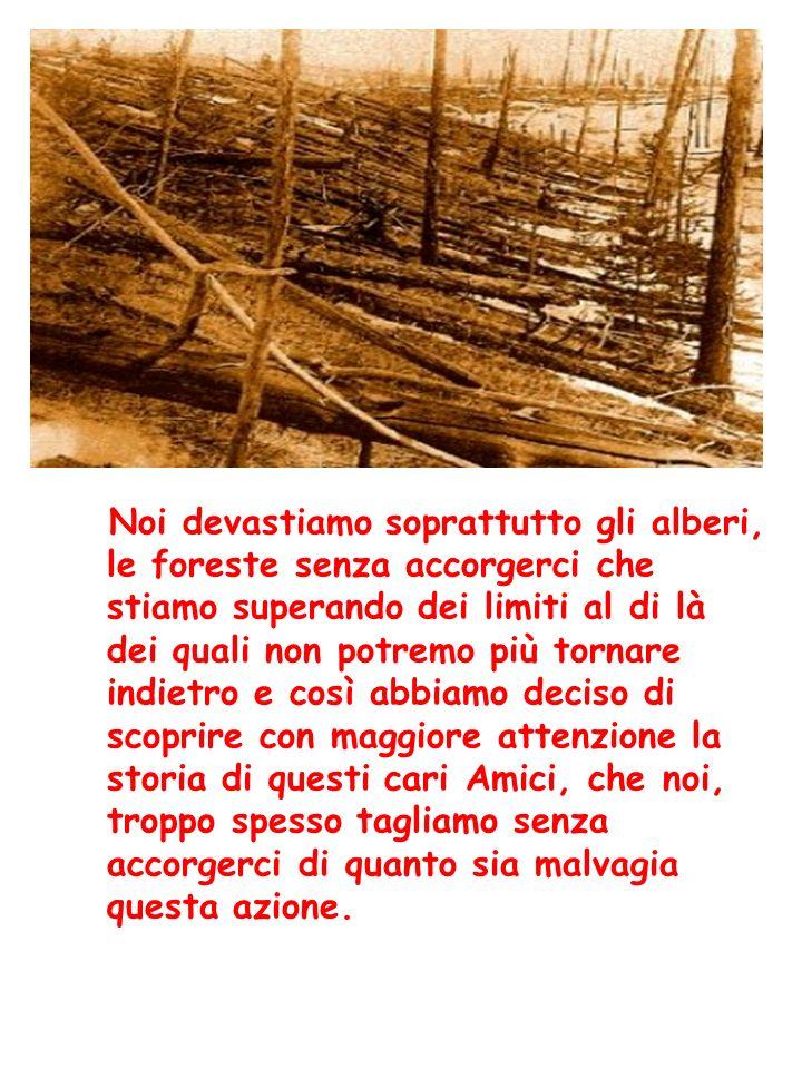 Noi devastiamo soprattutto gli alberi, le foreste senza accorgerci che stiamo superando dei limiti al di là dei quali non potremo più tornare indietro